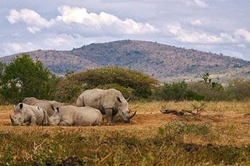 South-Africa Kruger National Park