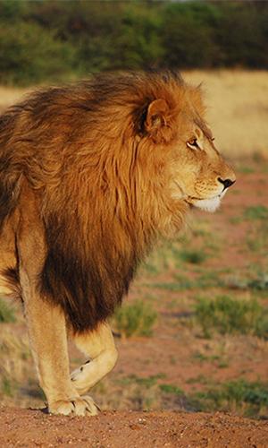 Travel Agent Platform Wildlife Travel