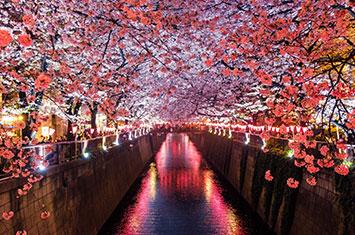 Japan Travel Agent Platform