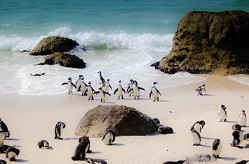 - penguins on the beach