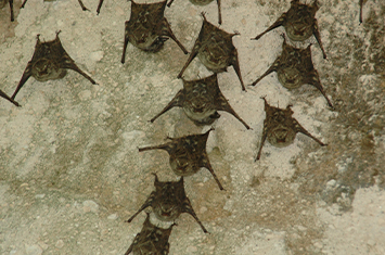 Nocturnal Bat Program