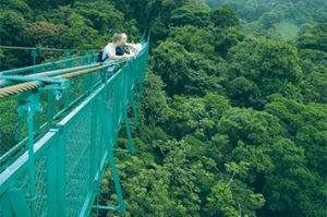 Selvatura Park hanging bridges