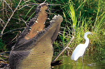Tarcoles river wildlife tour