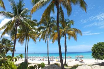 cuba varadero palm tree