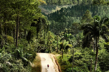 cuba forest road
