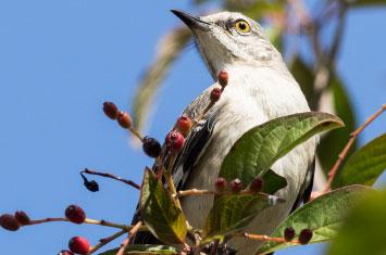 cuba bird branch