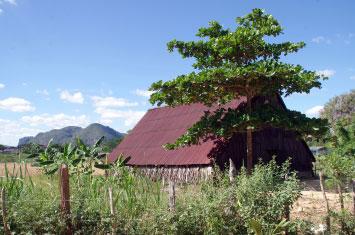 cuba farm