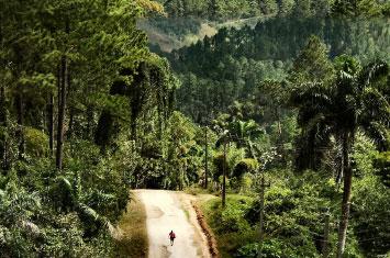 cuba forest