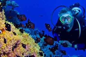 zanzibar diving