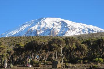 kilimanjaro forest view