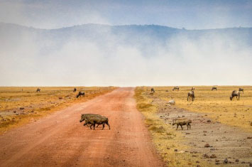 ngorongo tanzania savannah