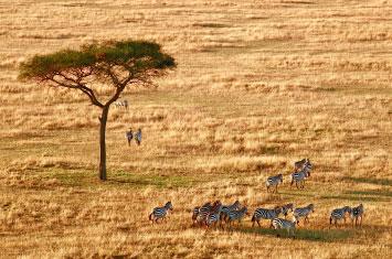 serengeti savannah