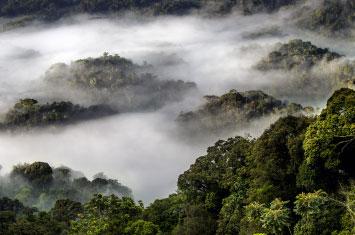 canopy forest rwanda