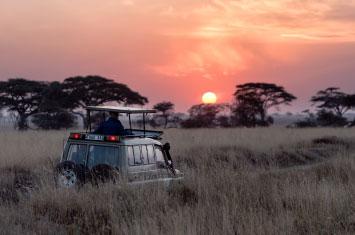 car safari