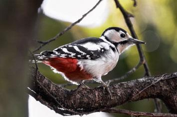 bird akagera