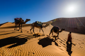 deser camel marocco