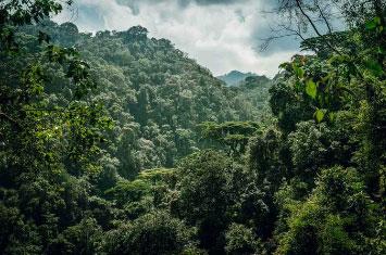 jungle rwanda