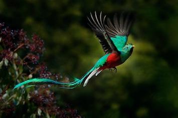 panama bird